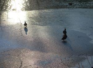 Зимний пейзаж. Снято на Sony RX100
